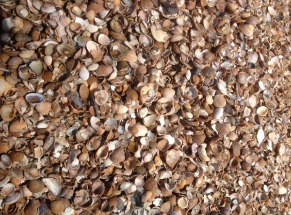 schelpen meenemen uit portugal